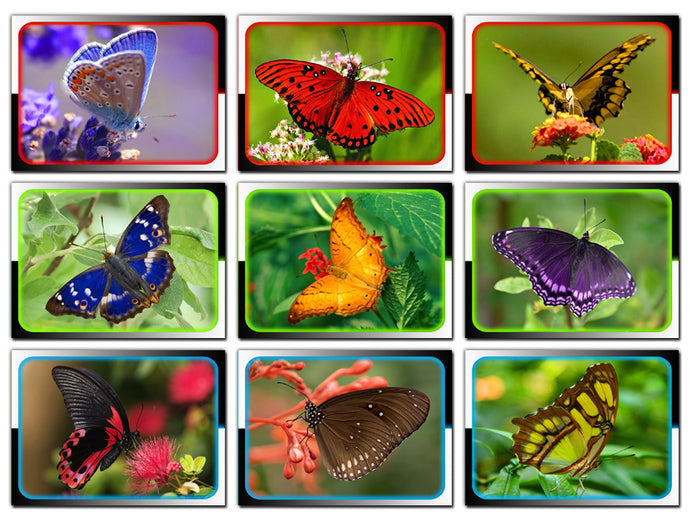 Butterfly Collector Cards - 9 Card Promo Prototype Set - LANGUAGE