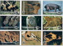 Load image into Gallery viewer, Club Pro Set - Animals on Safari - 9 Card Promo Set