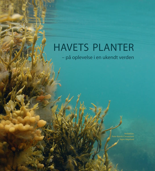 Havets planter