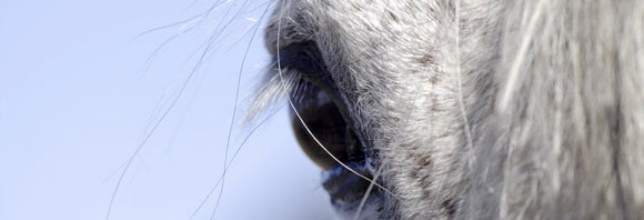 Close-up photo of a horse's eye