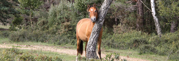 Horse scratching his mane on a tree.