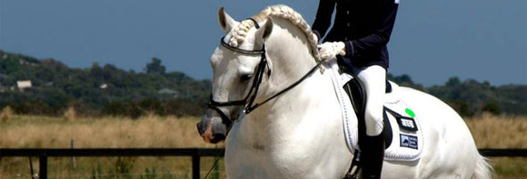 Grey dressage horse performing at a show