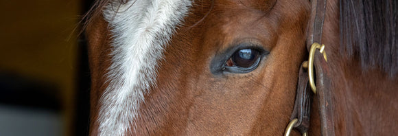 Close-up of a horse's eye and forehead