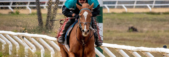 Racehorse breezing on a training track.