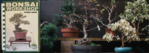 Bonsai Workshops
