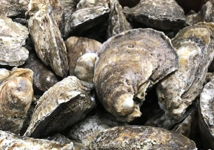 30# Box of Gulf Coast Oysters, LA (60-80ct.)