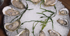 Great White Oysters, Cape Cod