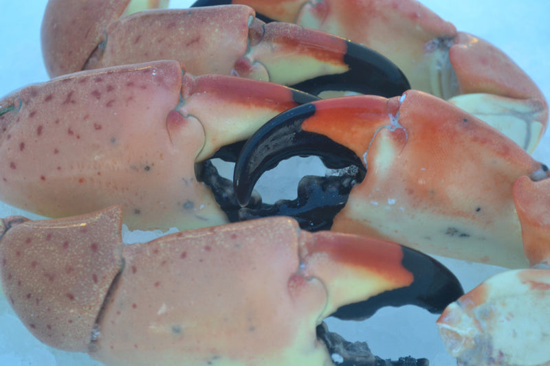 Jumbo Stone Crab (1 Pound) - Pelican Seafood Company