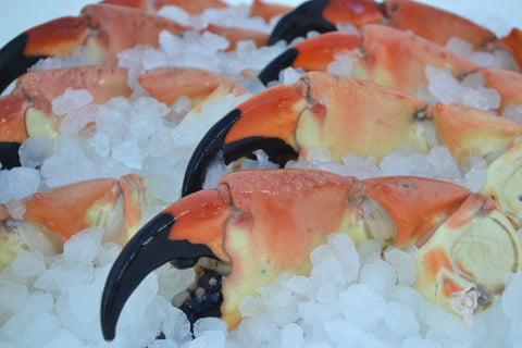 Large Stone Crabs
