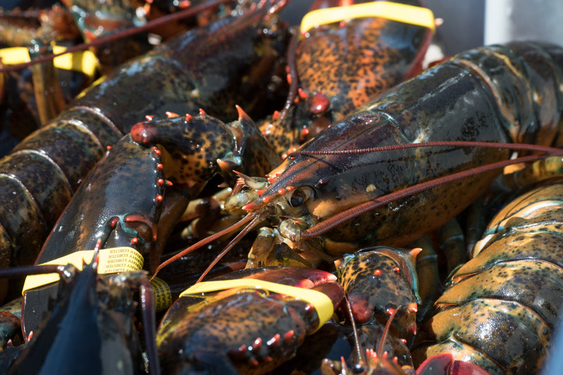 Live Maine Lobster  $18.99/lb