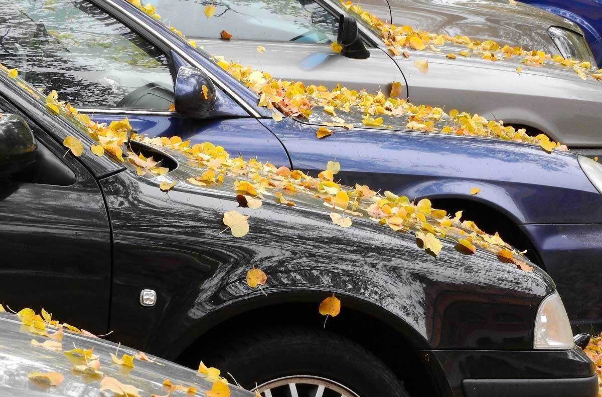 Can Falling Leaves Damage Your Car?
