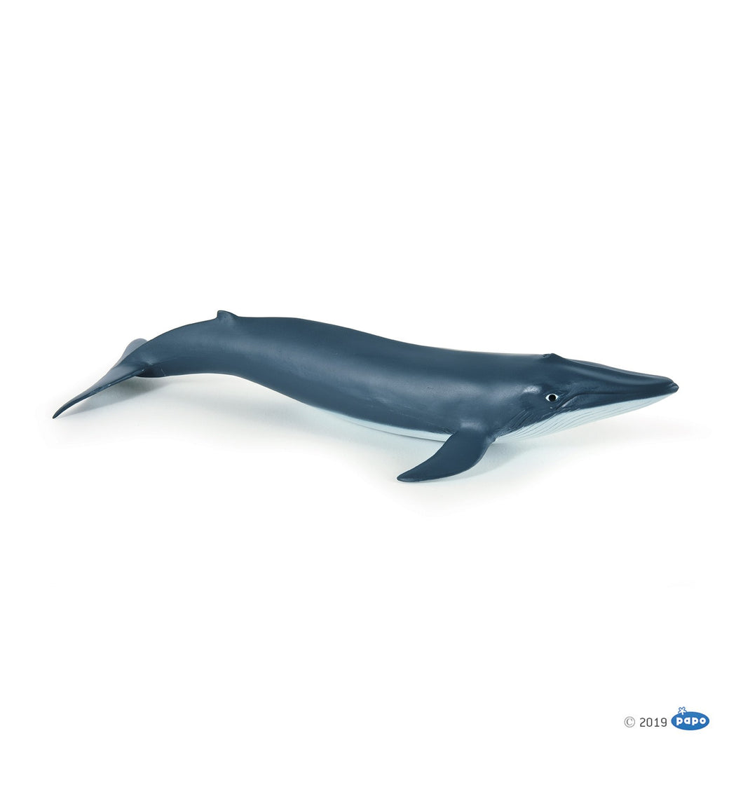 Papo France  Blue Whale Calf