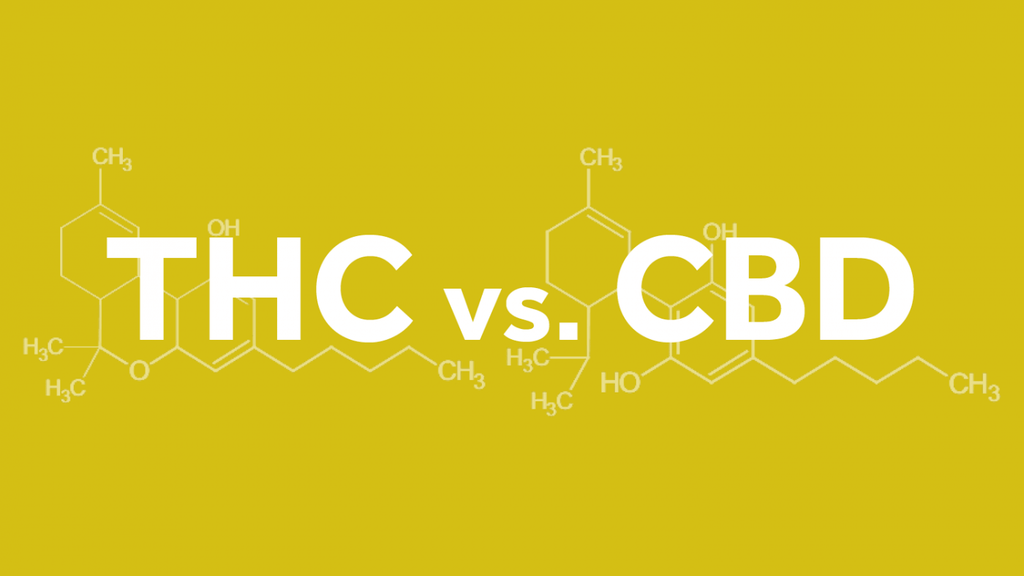 THC & CBD: Getting High vs. Getting Healthy