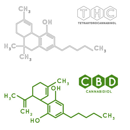 CBD vs. THC: What is the Difference?