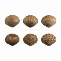 6 shell types