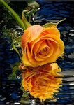 Tableau D'Une Rose Jaune - 5D Kit Broderie Diamants/Diamond Painting AF9348