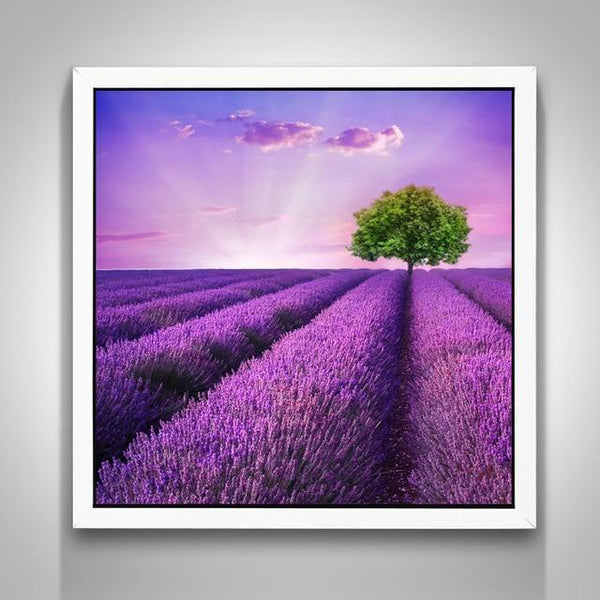 Grosses Soldes Photo De Champ De Lavande - 5D Kit Broderie Diamants/Diamond Painting NA0047