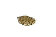 Load image into Gallery viewer, Mississippi Map Turtle  (Graptemys pseudogeographica)