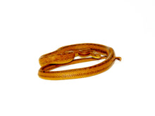 Load image into Gallery viewer, Everglades Rat Snake (Elaphe obsoleta rossalleni)