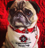 St.John Ambulance Therapy Dog