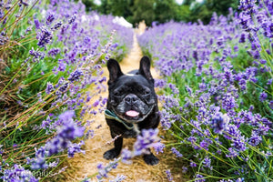 No. 20 SERENITY NOW: Lavender + Sandalwood Candle
