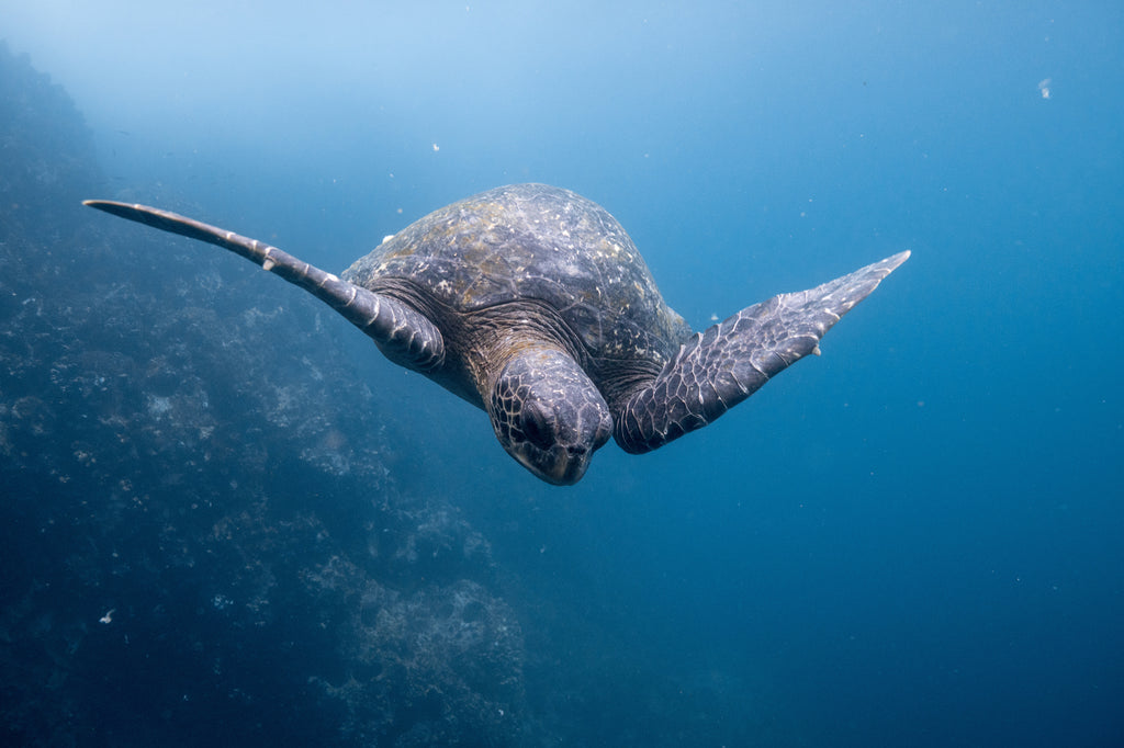 sea turtle the ocean cleanup