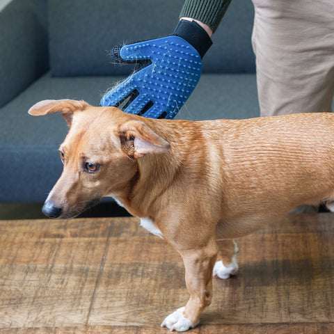 Pet Grooming and De-Shedding Brush Glove