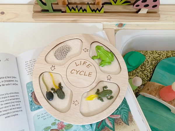 Wooden Life Cycle Tray
