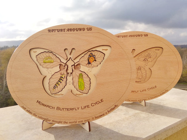 Butterfly's Life Cycle Puzzle