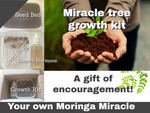 Miracle Moringa tree grow kit