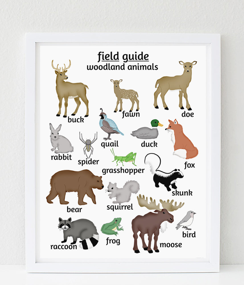 Woodland Animal Poster Field Guide Series Alley Kids