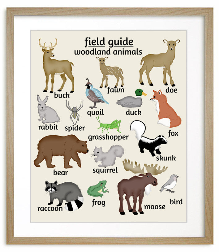 Field Guide To Woodland Animals Childrensart Nursery Art