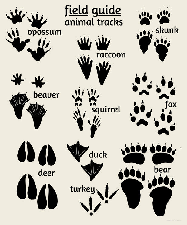 Tactueux image with free printable animal tracks