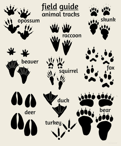 photo regarding Free Printable Animal Tracks named Woodland Sector Consultant Sequence for nursery young children Alley Children