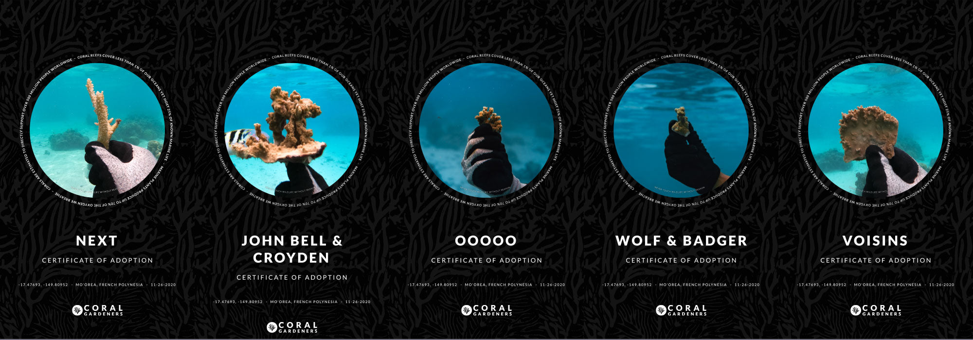 Coral reefs adopted in names of NEXT, OOOOO, John Bell & Croyden, Voisins, Wolf & Badger
