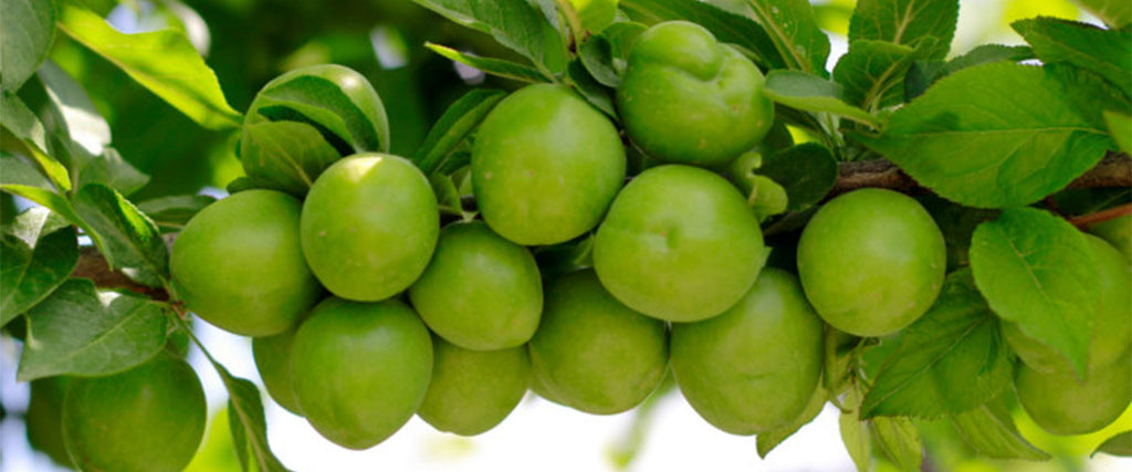 Kakadu plum is also known as gubinge or billygoat plum