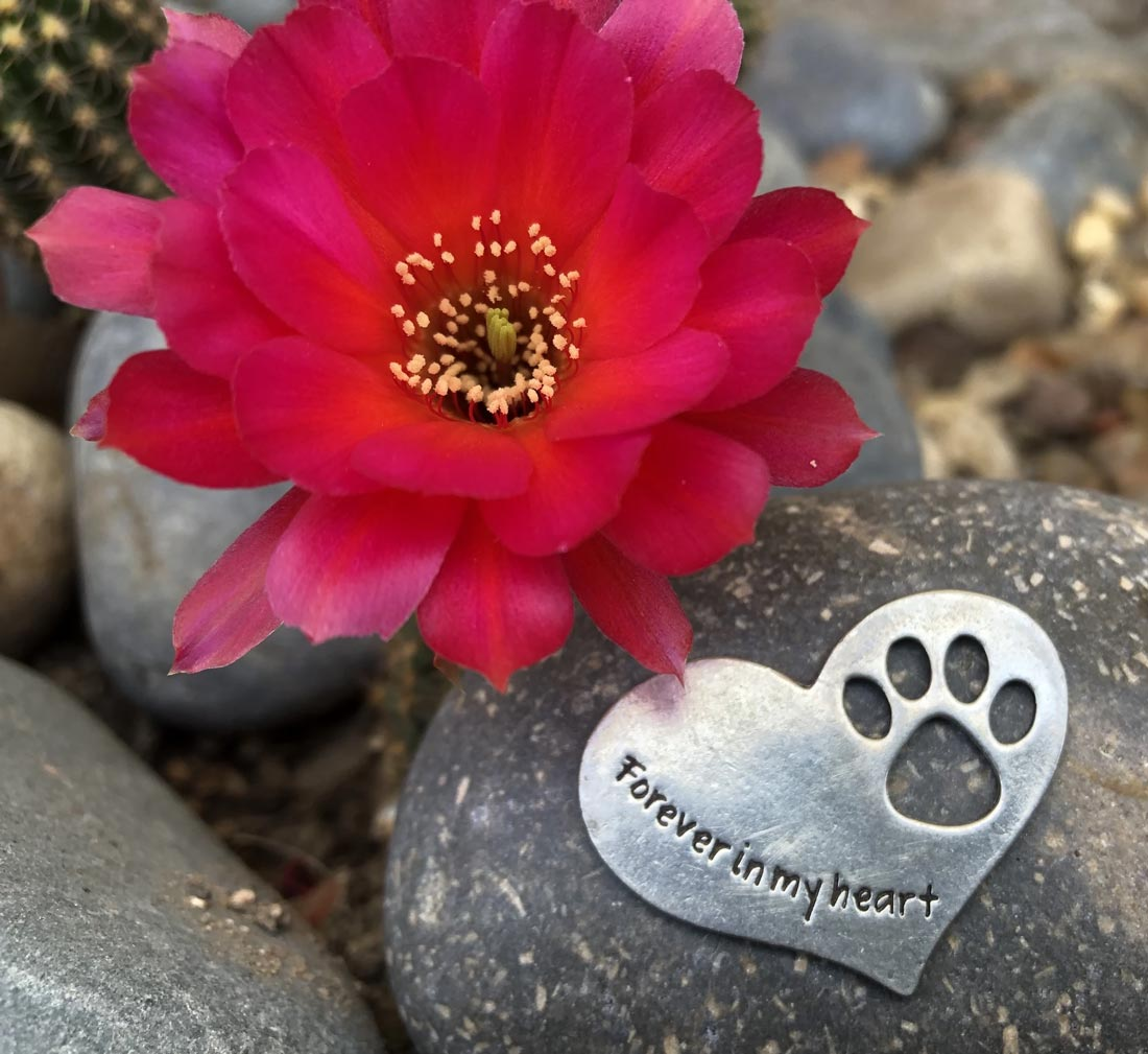 Pet Memorial Stone Forever in my Heart | Pet Memorial Gifts