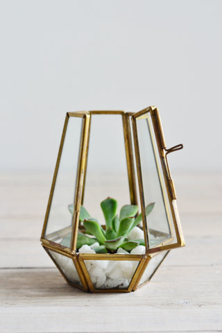 Brass terrarium / candle holder