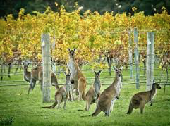 Support Australian wineries and indulge yourself in some of the world's best!
