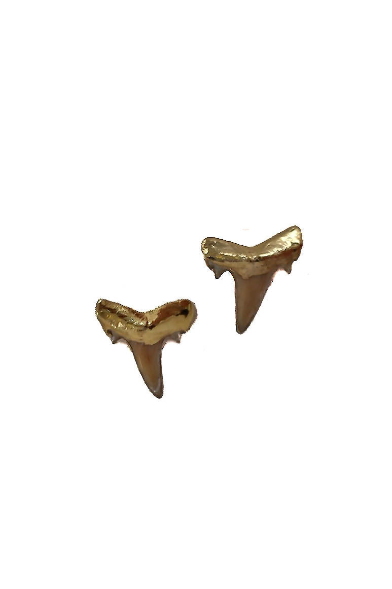 shark tooth earrings - petite