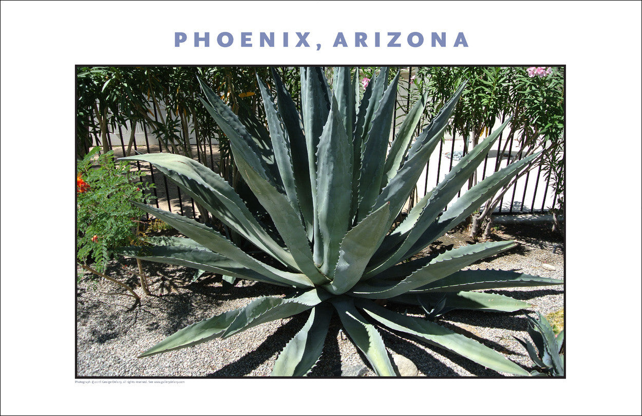 Arizona Flora Photo Wall Art #1004