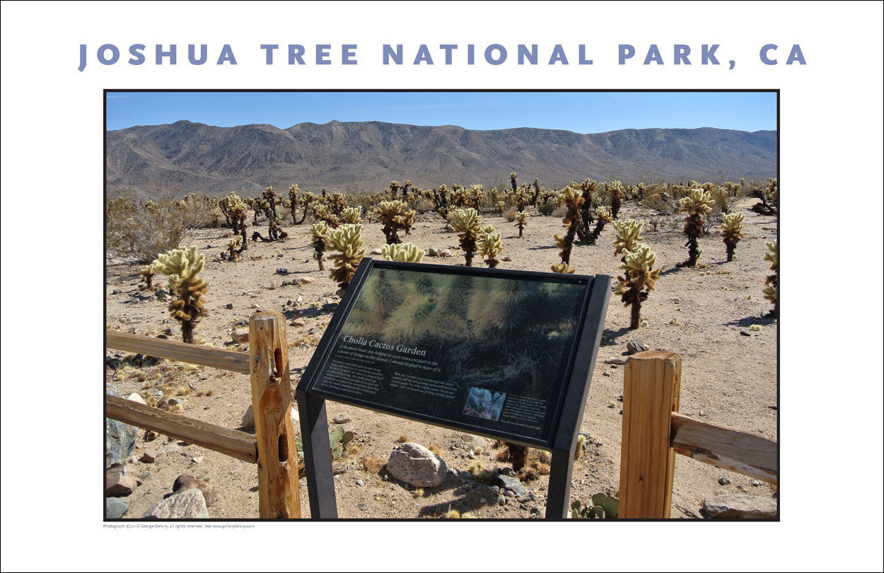 Home to Cholla Cactus, Joshua Tree National Park...CA Photo Art #1006