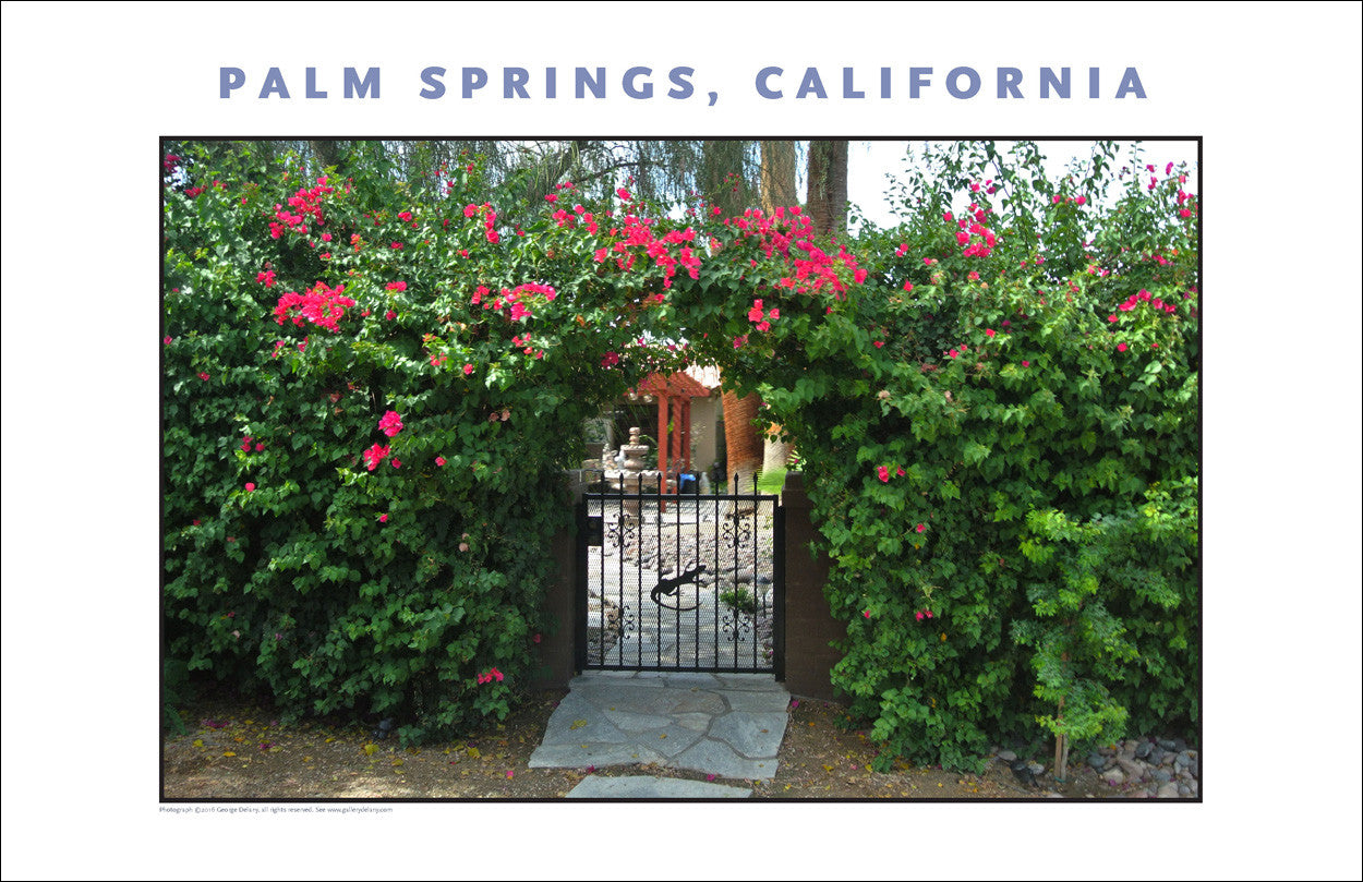 Tea Roses Over Gate... on House Tour In Palm Springs...CA Photo Art #1029