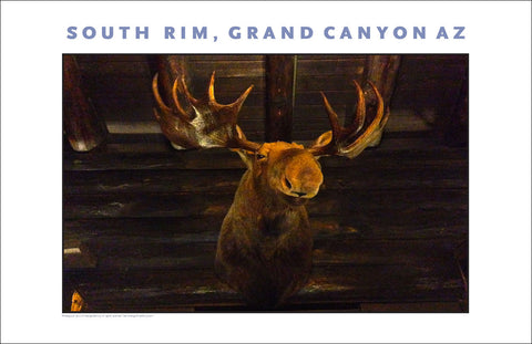 Moose at El Tovar, South Rim, Grand Canyon, AZ Photo Wall Art #1121