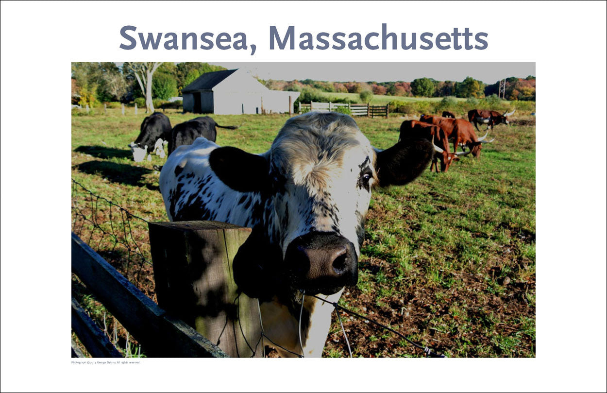 Swansea, Ma, Young Bull on Canvas Photo Print Collection #267