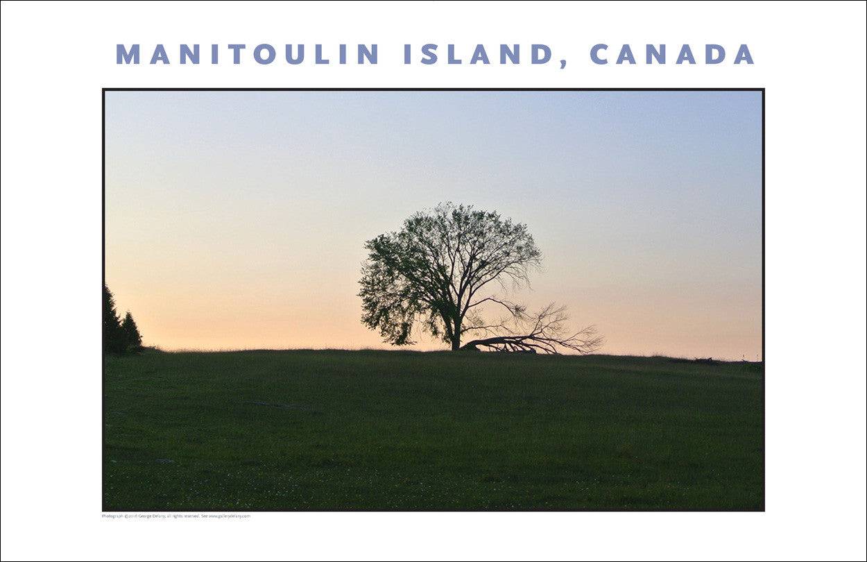 Lone Tree at Dusk, Manitoulin Island Ontario Wall Art #962