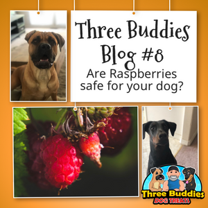 Raspberries safe for your pups?
