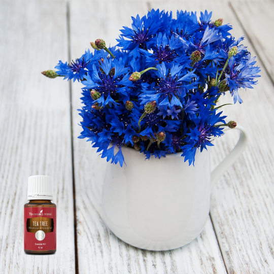Essential Oil Tips For Cut Flowers