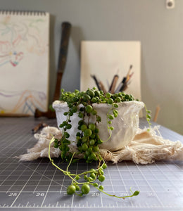 Textured Planter with String of Pearls