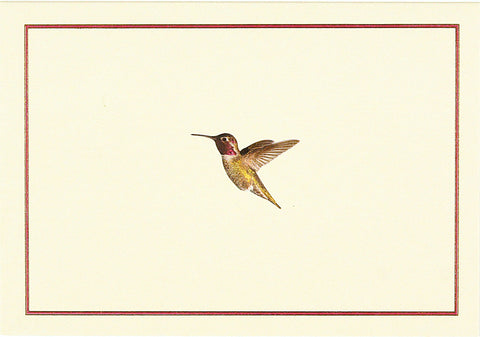 Boxed Cards- Hummingbird